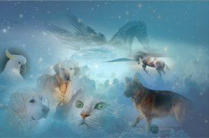 de quoi sagit-il - Communication Animale - animaux vivants et décédés - télépathie
