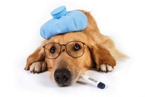 communiquer avec votre animal - urgences - malade - nathalie martinand